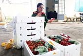 Nông sản Trung Quốc đội lốt đặc sản Đà Lạt Gian thương tiếp tay