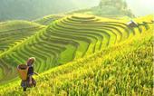 Hộ chiếu vắc xin sẽ là giải pháp phá băng cho ngành du lịch Việt Nam trong thời gian tới